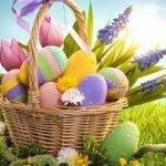 Окрашивание яиц натуральными красками